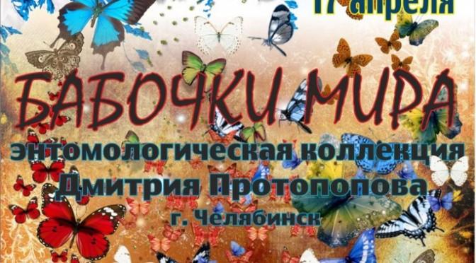 Выставка, бабочки